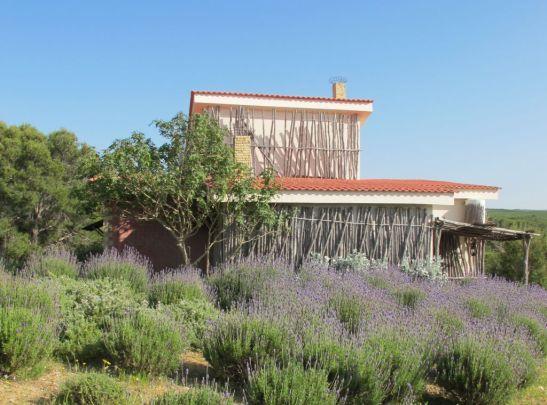 Casa cu lavanda numita Villa Tabarka domniul Ksar Ezzit din Tunisia