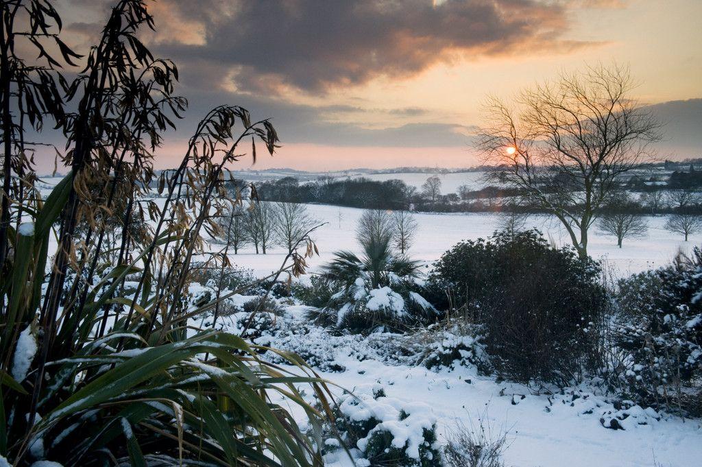 Gradina Dry Garden de la RHS Hyde Hall din Essex. Foto RHS