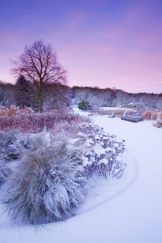 Grupuri de arbusti in gradina Harlow Carr din Yorkshire. Foto RHS