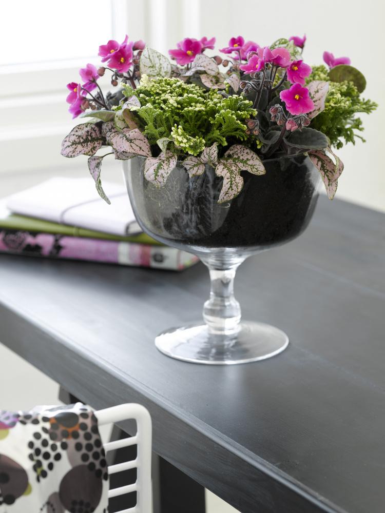 Saintpaulia ionantha adică pe numele comun violeta de parma arata excelent intr-un aranjament dispus intr-o fructiera.