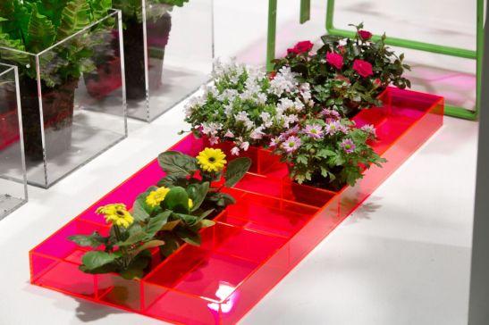 Plantele pitice sunt in trendurile primaverii 2013.