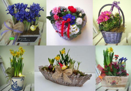 Propuneri de cadouri flori la ghiveci si aranjamente de la Trias