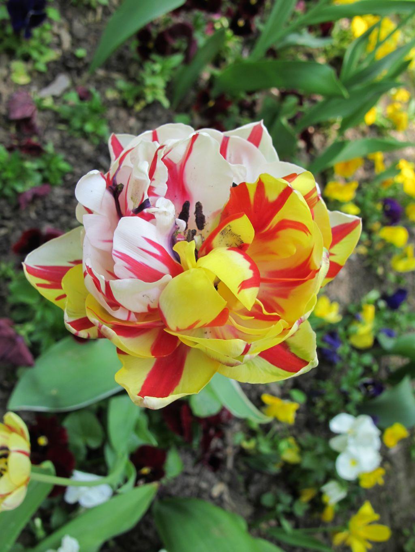 adelaparvu.com despre simbolistica florilor 11
