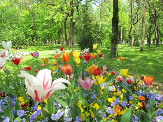 adelaparvu.com despre simbolistica florilor 4