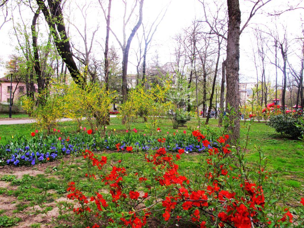 Flori multicolore
