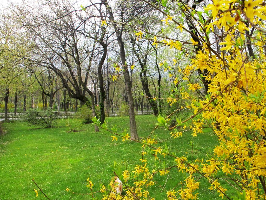 Forstizia si verdele ierbii