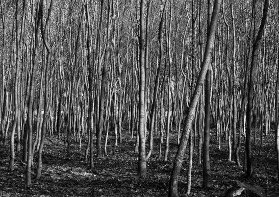Mogosoaia - fotografie de Eliza Marin © Eligreeneli