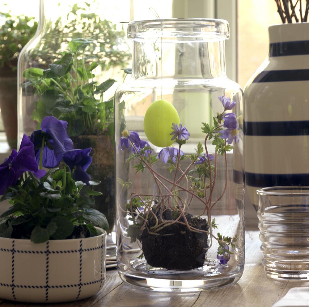 Uite cat de frumos poate sa arate pentru masa de Paste o planta fara ghiveci expusa la loc sigur intr-un borcan. dar sa o plantezi la loc in ghiveci dupa zilele festive