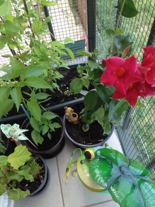 Decoratiunile si accesoriile pentru flori inveselesc balconul Oanei