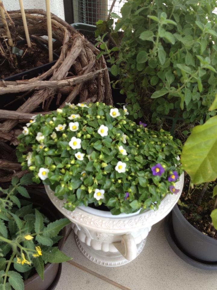 Flori frumoase alaturi de ierburi aromatice si legume