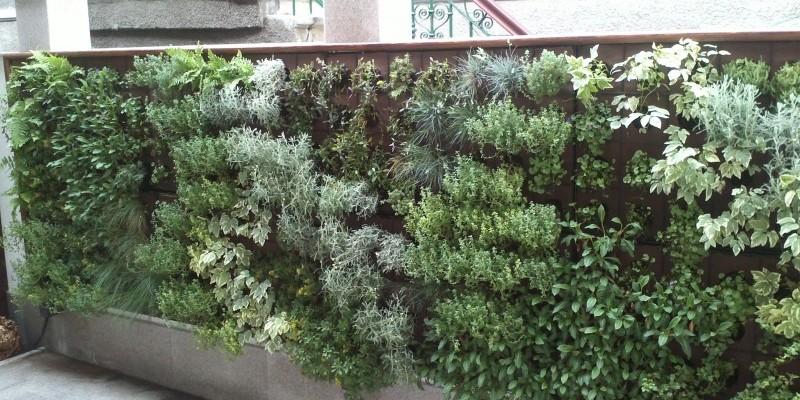 Gradina verticala amenajata de Arta Gradinilor intr-o curte din Bucuresti