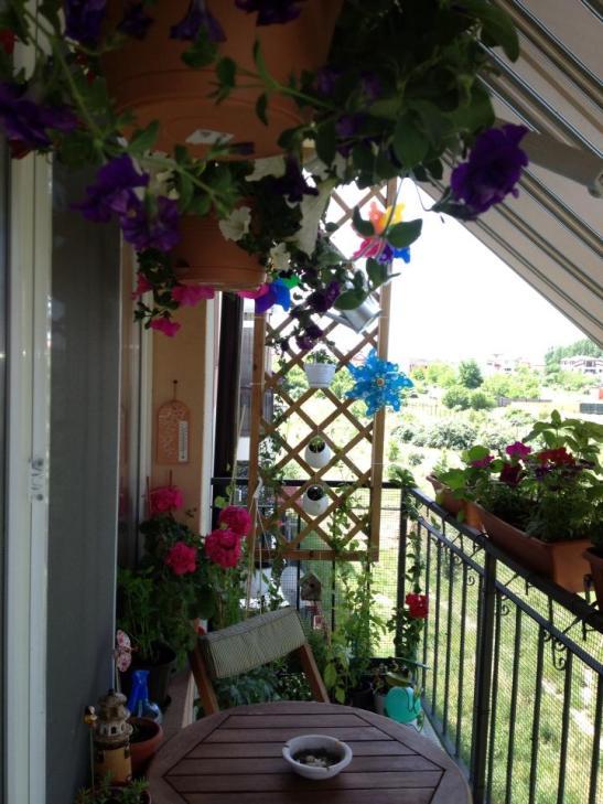 Grijalul din lemn pentru plante separa frumos balconul si va arata minunat imbracat de plantele cataratoare