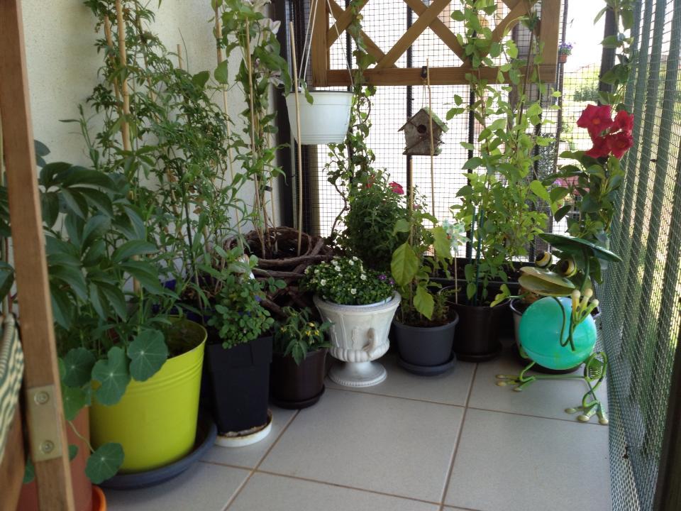 Intr-o parte a balconului sunt grupatele plantele mai mari formand un colt verde