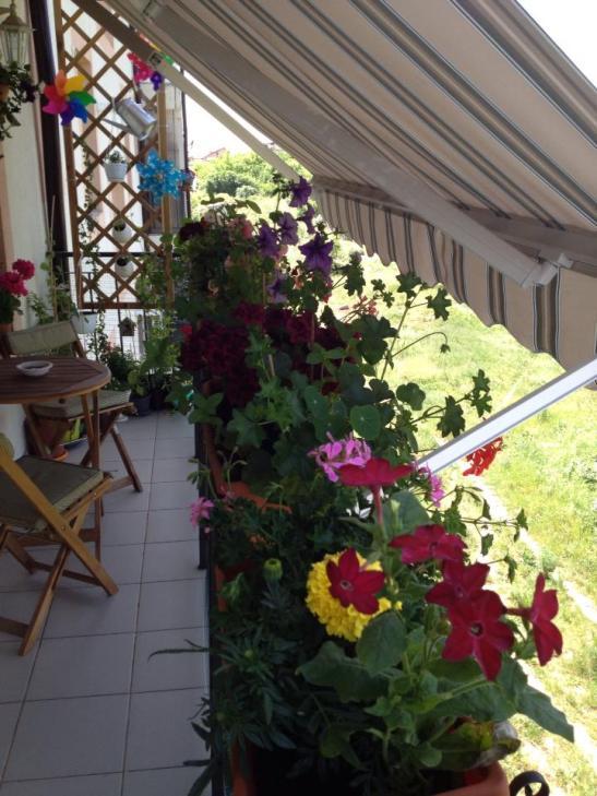 Jardinierele montate in afara balustradei sunt protejate in miezul zilei de soarele dogoritor