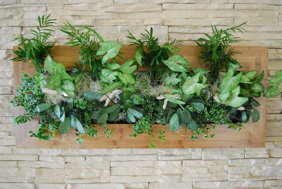 Palma Bambus 37x92 cm. Dimensiuni disponibile 31x31, 37x58 si 37x92 cm. Rama este realizata din lemn de bambus, iar compozitia cuprinde specii precum Chamaedorea sau Ficus. Prin Arta Gradinilor