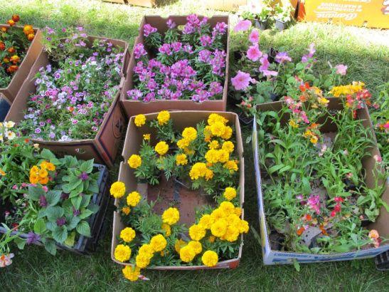 Plante mici cu flori la 5 lei bucata
