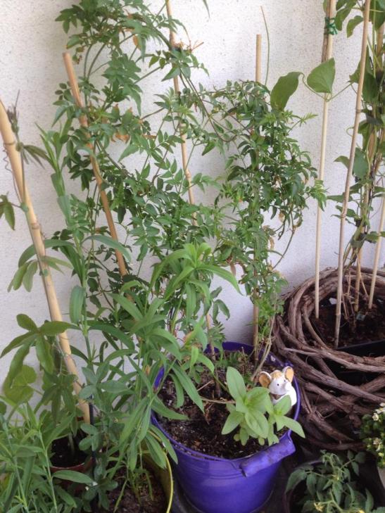 Plantele cresc frumos in ritmul lor si te rasplatesc cu frumusete