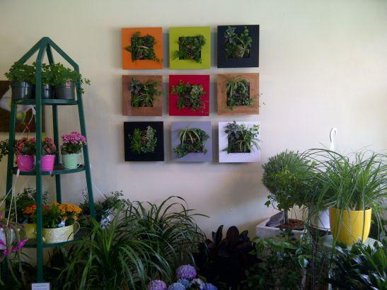 Tablouri cu plante cu rame colorate. Foto By Nature Design