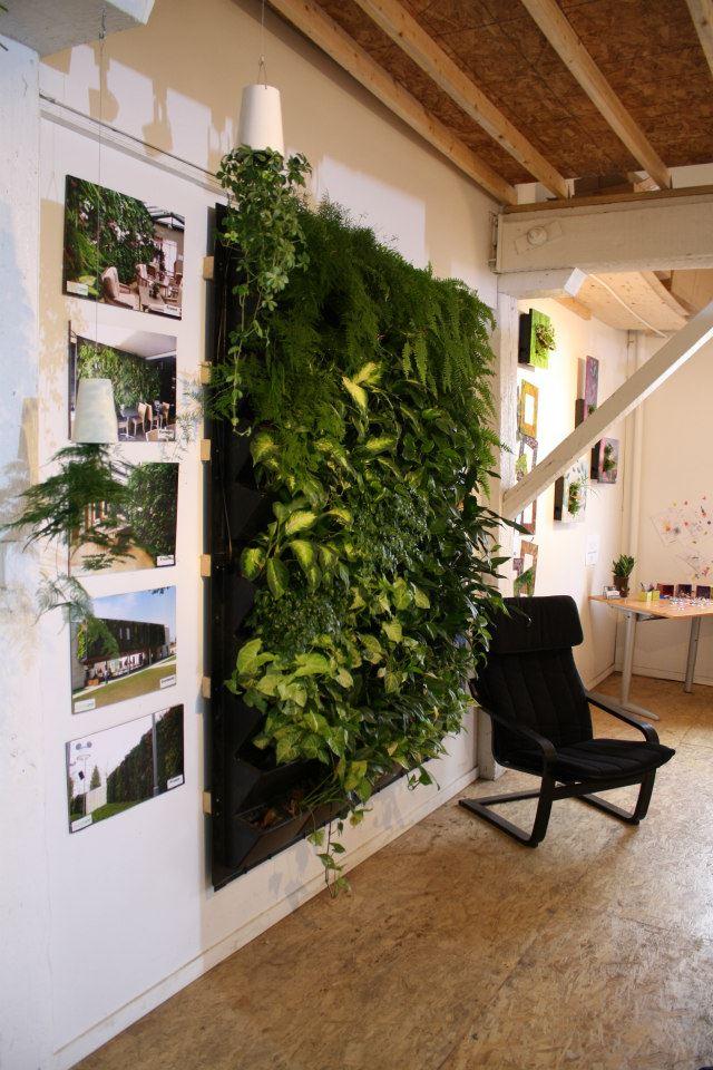 Tablouri si gradina verticala. Foto By Nature Design