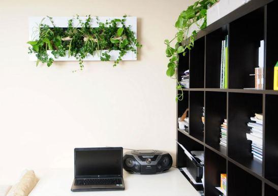 Tablourile cu plante de la Arta Gradinilor se potrivesc de minune la birou.