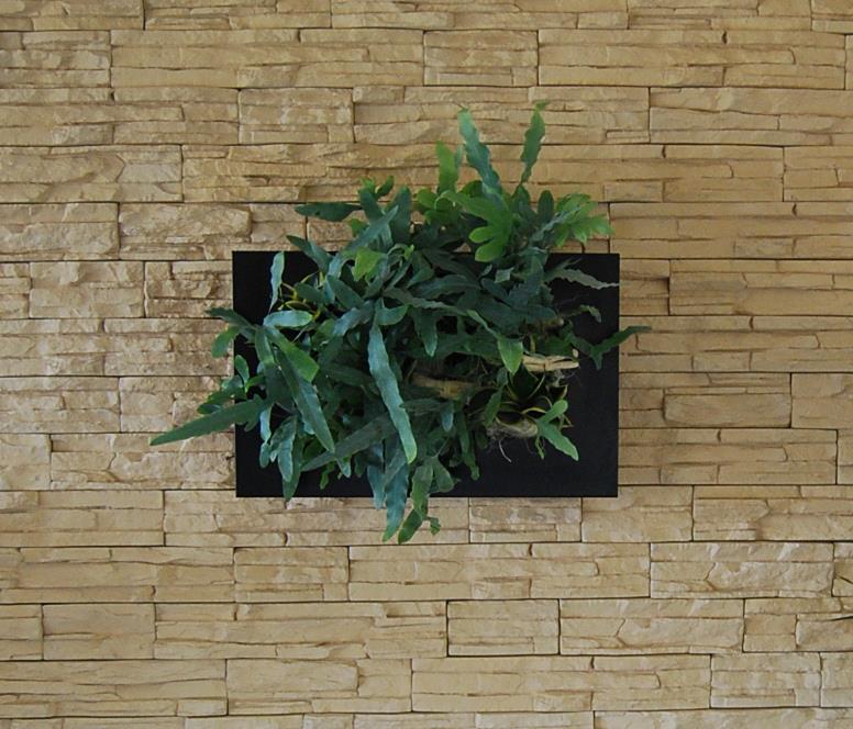 Vegas Negru 37x58 cm Compozitie cu Sanseveria si Platicerum Dimensiuni disponibile 31x31, 37x58 si 37x92 cm. De la Arta Gradinilor