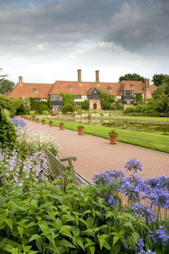 Planta Agapanthus în plină splendoare în grădina denumită Canal Garden parte a RHS Garden Wisley din Surrey, Marea Britanie.