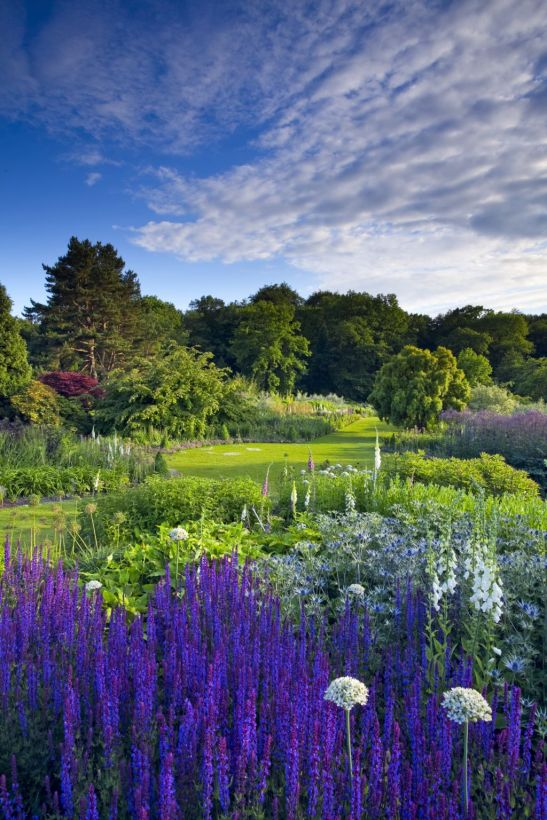 Speciile de Allium nigrum și Salvia sylvestris 'Rugen' în grădina  RHS Garden Harlow Carr din Yorkshire, Marea Britanie