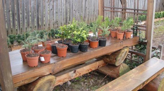 Diferite specii de plantute ca si marturii de la Dream Gardens