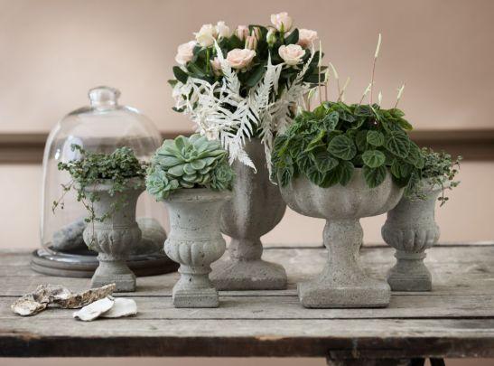 Aranjament Botanical Renaissaince cu Rosa, Peperomia, Echeveria si Pilea