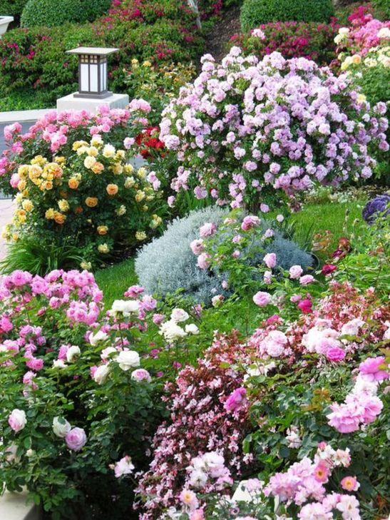 Sursa foto: Friends of the San Jose Rose Garden