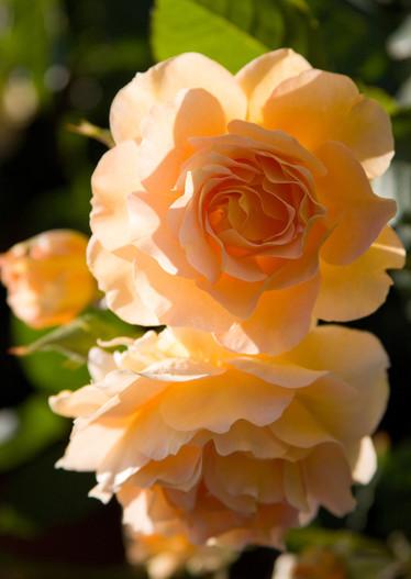 adelaparvu.com despre gradina formala cu flori  design Margie Grace (2)