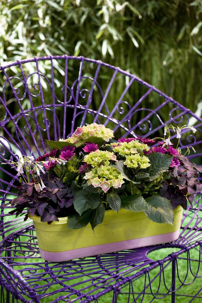 adelaparvu.com sfaturi pentru inflorirea hortensiei Foto Floradania (3)