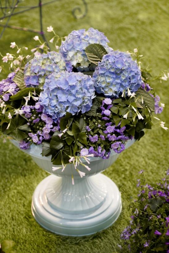 adelaparvu.com sfaturi pentru inflorirea hortensiei Foto Floradania (7)