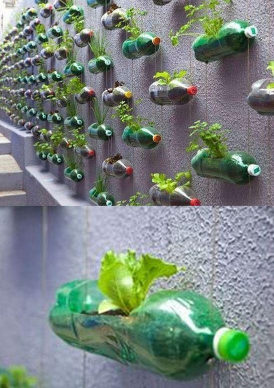 Sticle de plastic folosite pentru gradini verticale