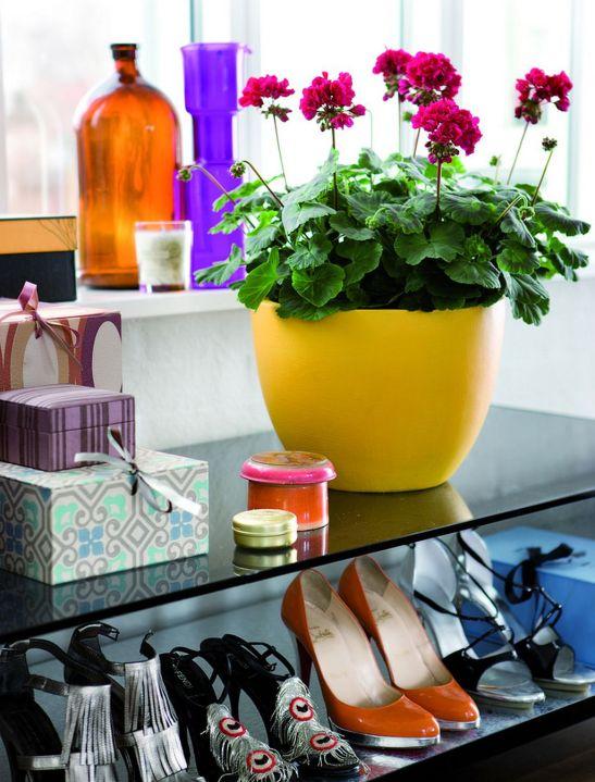 adelaparvu.com despre muscate in sezonul rece Pelargonium  (11)