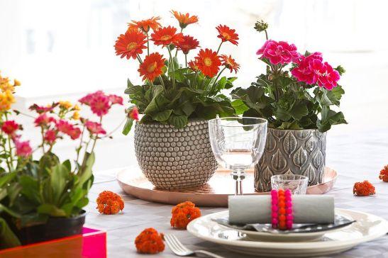 adelaparvu.com despre muscate in sezonul rece Pelargonium  (3)