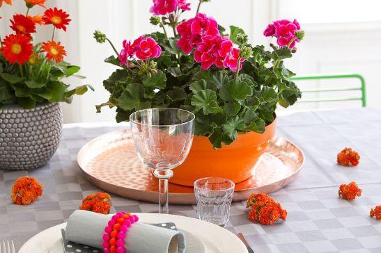 adelaparvu.com despre muscate in sezonul rece Pelargonium  (7)